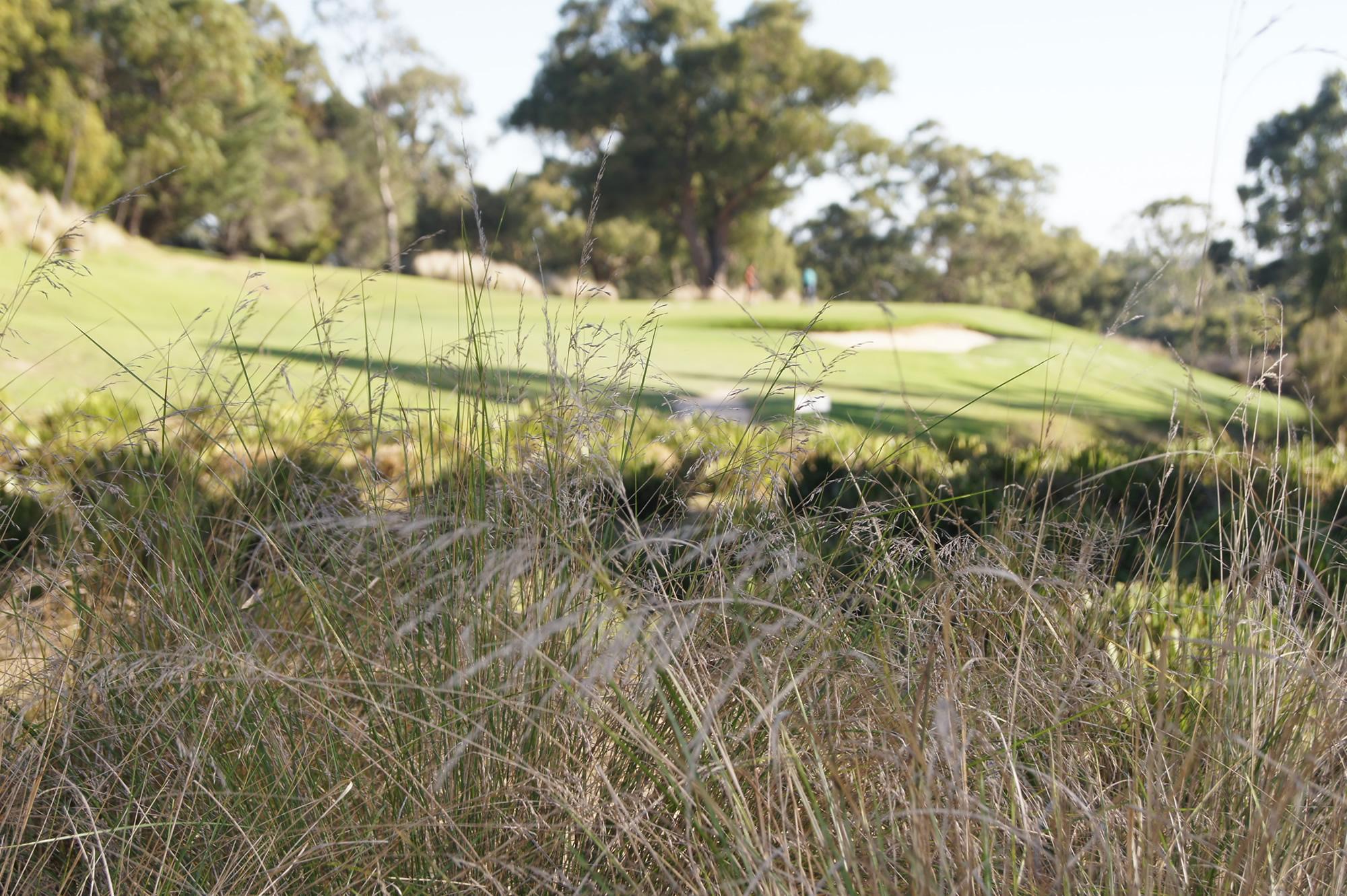 9th Berwick Montuna Golf Club